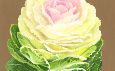 cauliflowereye