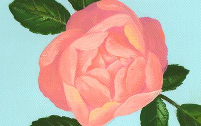 pinkroseeye